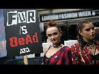 العرب اليوم - بالفيديو منظمة بيتا تقتحم عالم الموضة للدفاع عن حقوق الحيوانات