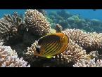 العرب اليوم - شاهد  مخاوف على الشعاب المرجانية في خليج العقبة