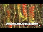 دمج الصحراء المغربية في الاتفاق الفلاحي مع المملكة