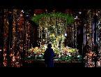 شاهد شوارع بروكسل تتزين بمئات الآلاف من الورود مع انطلاق مهرجان الأزهار