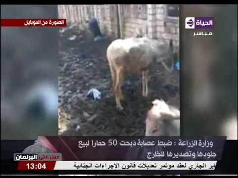 العرب اليوم - شاهد توقيف عصابة ذبحت 50حمارًا