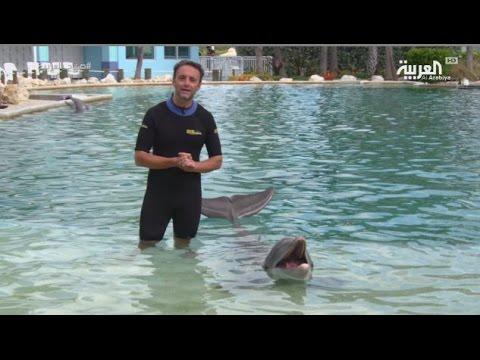 العرب اليوم - بالفيديو تجربة السباحة مع الدلافين في سي كواريوم ميامي