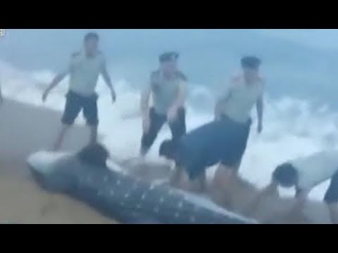 العرب اليوم - لحظة إنقاذ سمكة قرش وإعادتها إلى المياه
