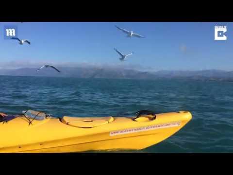 العرب اليوم - شاهد معركة شرسة بين كلب البحر وأخطبوط