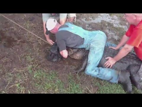 العرب اليوم - بالفيديو لحظات مرعبة لصيد تمساح