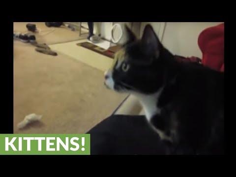 العرب اليوم - قطة تلجأ إلى الثلاجة للهروب من ارتفاع درجات الحرارة
