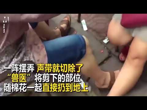 العرب اليوم - شاهد الصين تحقق مع طبيب يجرى عمليات لإخراس الحيوانات