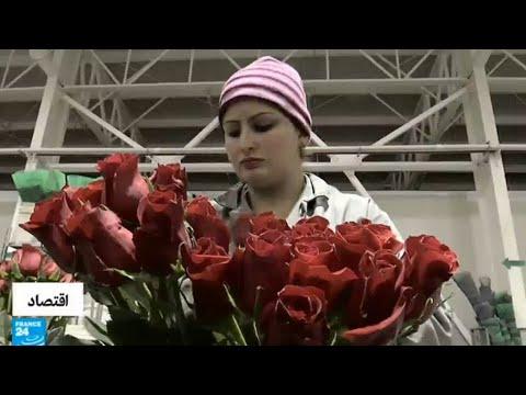 عيد الحب فرصة للعمل لإنتاج المزيد من الورود