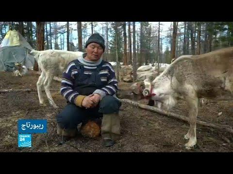 رعاة الرنة على الحدود الروسية المنغولية ينفصلون عن الحداثة