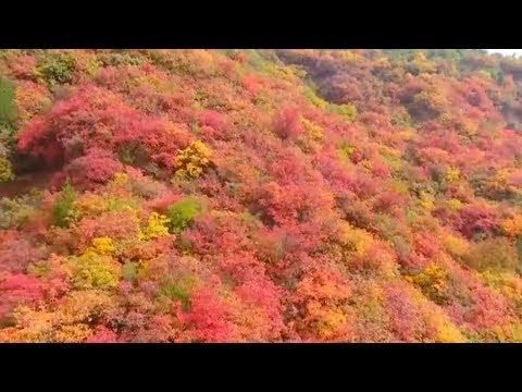 red leaves add warmth to the landscape