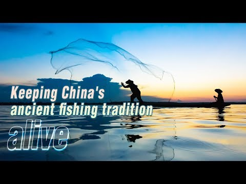 keeping chinas ancient fishing tradition alive