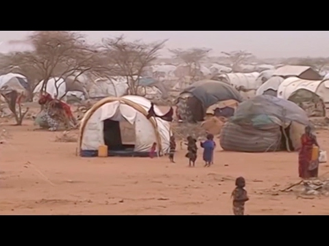 Arab Today, arab today somalia concerned about impact of travel ban