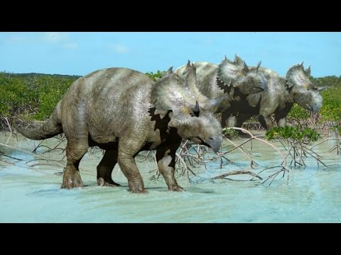 new horned face dinosaur species found