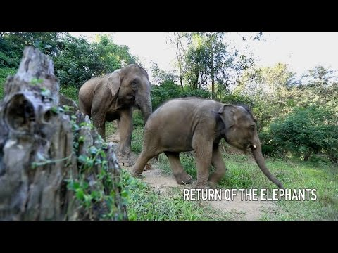 Arab Today, arab today return of the elephants
