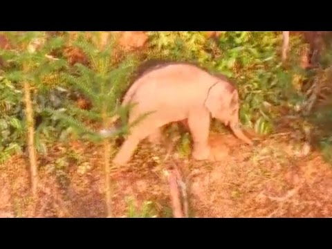 Arab Today, arab today to save wounded wild baby elephant in china