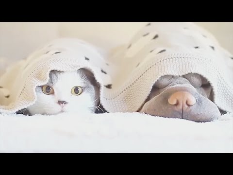 Arab Today, arab today cat and dogs adorable friendship
