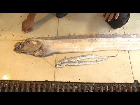 Arab Today, arab today threemeter long cutlassfish found