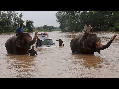 Arab Today, arab today elephants help tourists in nepal