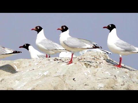 Arab Today, arab today rare birds seek refuge