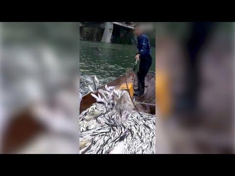 horrifying footage crazy electrofishing