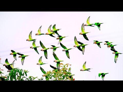 parrot rain falls