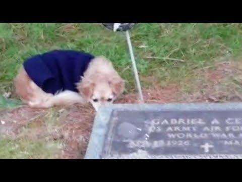 loyal dog refuses