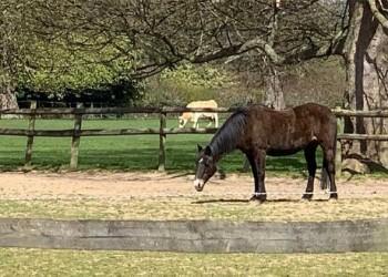 إنتاج مربط دبي للخيول العربية ينتزع الذهب في بطولة بيرغامو الدولية