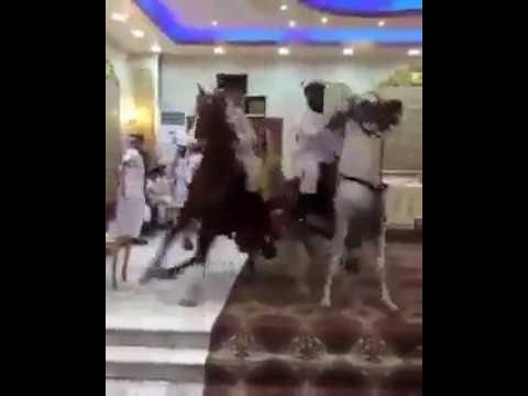 العرب اليوم - شاهد استعراض بالخيول داخل قاعة حفلة زفاف تثير جدلًا بين السعوديين