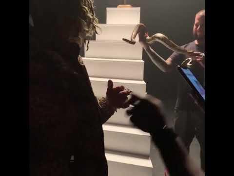 فنان يتعرض للدغة أفعى خلال تصويره فيديو كليب