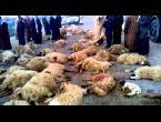 العرب اليوم - شاهد  دهس قطيع كبير من الخراف