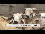 العرض يتجاوز الطلب على الماشية بأكثر من 40 في المغرب