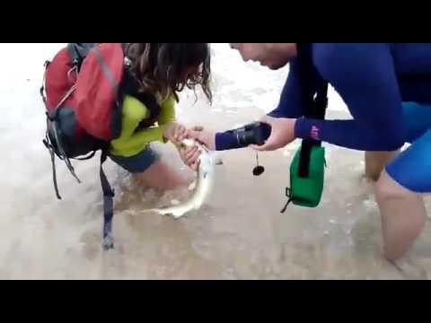 العرب اليوم - بالفيديو  مشاهد مرعبة لمحاولة التقاط صورة شخصية مع قرش