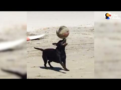 العرب اليوم - شاهد كلب ينافس نجوم الملاعب في التوازن