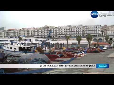 العرب اليوم - الحكومة تجمد مشاريع الصيد البحري في الجزائر