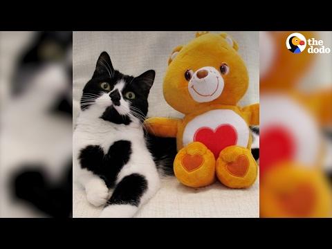 العرب اليوم - بالفيديو زوي قطة صغيرة ولدت بقلب مميّز على صدرها