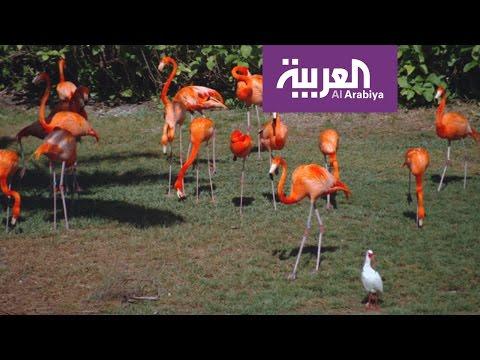العرب اليوم - شاهد جزيرة الغابة موطن لأكثر من 120 صنفًا من الحيوانات
