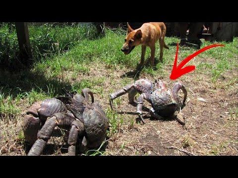 العرب اليوم - شاهد 6 حيوانات ضخمة لن تصدّق أنّها موجودة في عالمنا