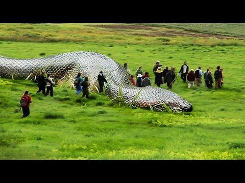 العرب اليوم - شاهد أضخم 5 ثعابين عملاقة حول العالم