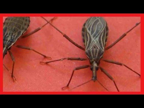 العرب اليوم - شاهد حشرة إذا وجدتها في منزلك عليك الاتصال بالإسعاف