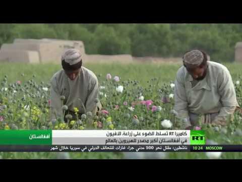 العرب اليوم - مشاهد كارثية لزراعة الأفيون في أفغانستان