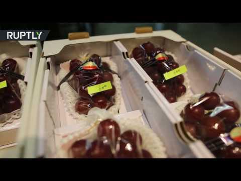 العرب اليوم - بالفيديو انطلاق مزاد أغلى عنب في العالم في اليابان