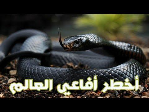 العرب اليوم - شاهد أخطر ١٠ أفاعي في العالم
