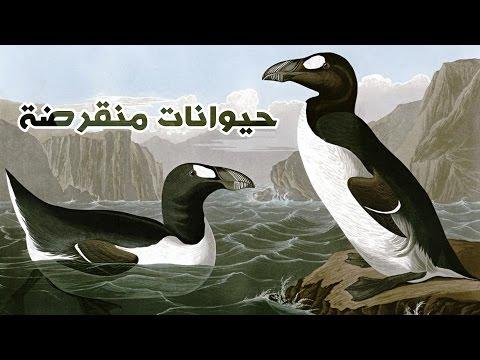 العرب اليوم - شاهد ١٠ حيوانات اصطادها البشر حتى الانقراض