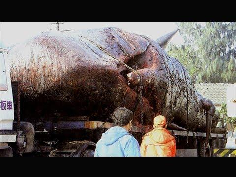 العرب اليوم - بالفيديو أمر لا يُصدق ماذا وجدوا في داخل بطن هذا الحوت العملاق