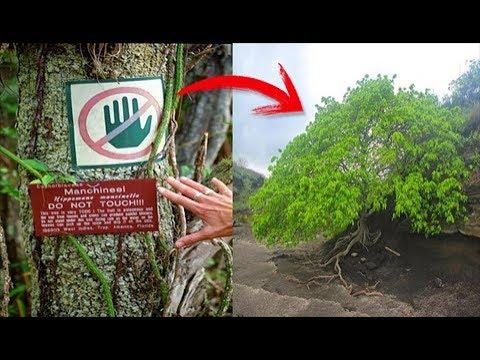 العرب اليوم - الشجرة يمكنها قتلك عند إقترابك منها