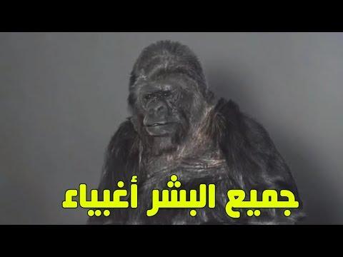 العرب اليوم - شاهد غوريلا تتحدث عن رأيها في الإنسان وفي كوكب الأرض