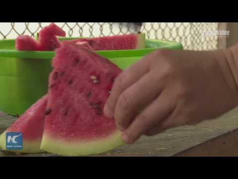 العرب اليوم - التكييف وشقق البطيخ أبرز طرق مواجهة الحر في حديقة الحيوان
