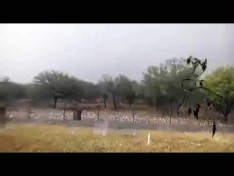العرب اليوم - ثلوج بحجم كرة الغولف تقتل الماشية وتدمّر السيارات