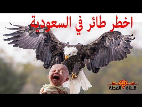 العرب اليوم - تعرف على أخطر طائر في العالم نسر جيفرين