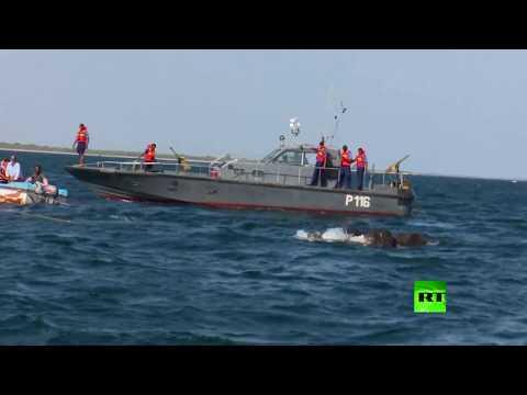 العرب اليوم - شاهد إنقاذ صغيري فيل من الغرق في الشاطئ